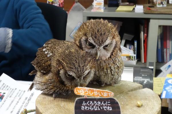 富士花鳥園@朝霧高原〜花と鳥の別天地