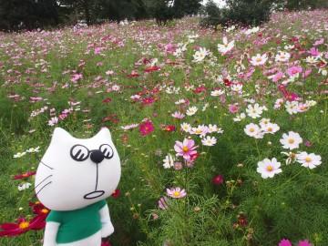 秋留台公園バラ園&秋川ファーマーズセンター(たまらんにゃ〜連れ歩き)