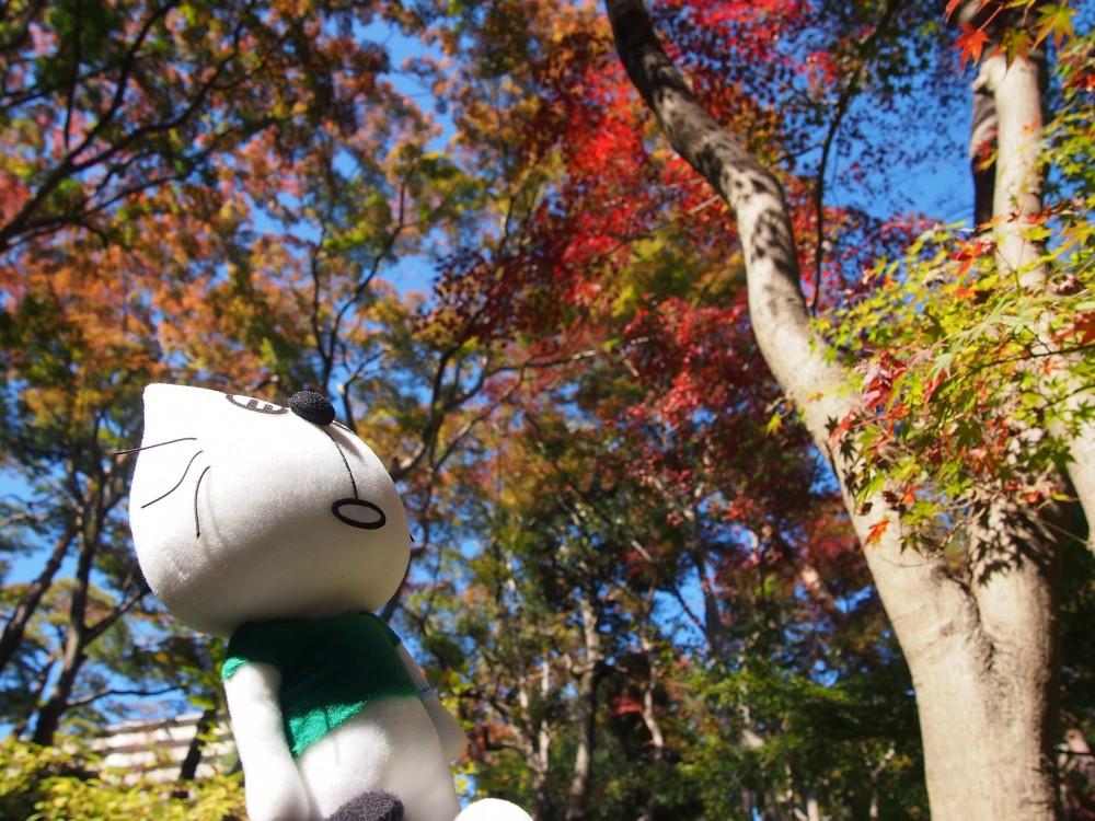 殿ヶ谷戸庭園の紅葉@国分寺駅南口〜たまらんにゃ連れ歩き