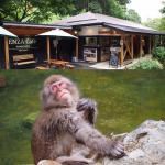 地獄谷野猿公苑Snow Monkey &『猿座カフェ』@長野県上林温泉〜北信州癒しのカフェ その②