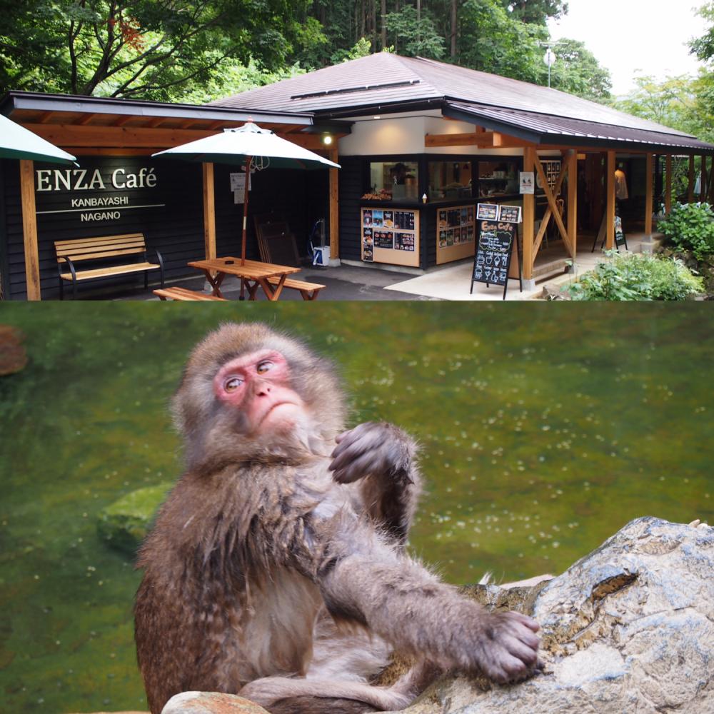 地獄谷野猿公苑『Snow Monkey 』&『猿座カフェ』@長野県上林温泉〜北信州癒しのカフェ その②