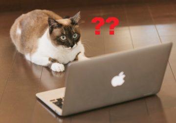 ブログに不具合発生→mixhostにサーバー移転しました