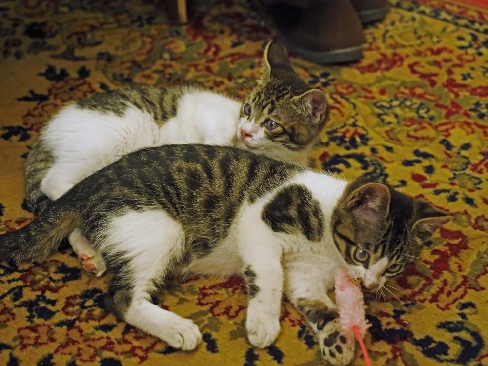 松山庭園美術館(再)@千葉県匝瑳市〜新入り猫のプッチとポッチは里親募集中
