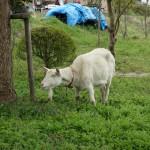 自家焙煎珈琲ジュリアン@埼玉県日高市〜窓の外には羊が2匹