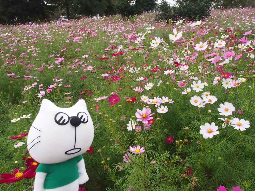 コスモスまつり2014@国営昭和記念公園〜たまらんにゃ〜連れ歩き